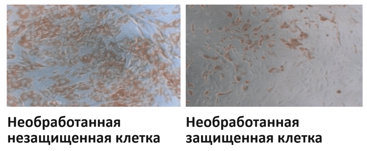 Ekletmarin-test-na-effektivnost-4